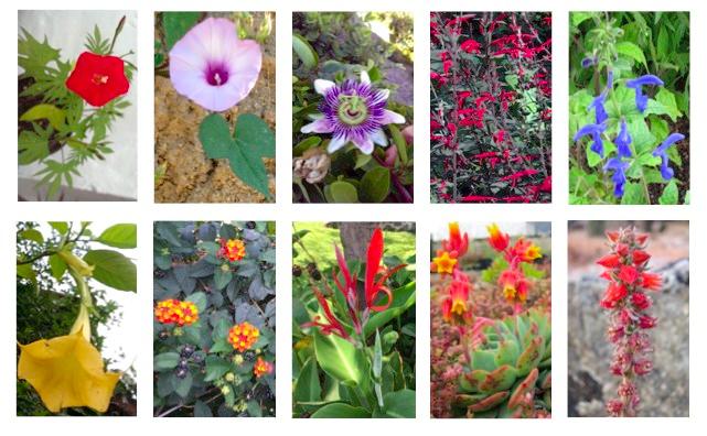 Flora colibríes